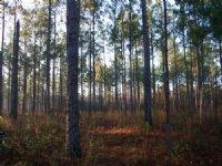 Crisp Timberlands - Getaway Tract