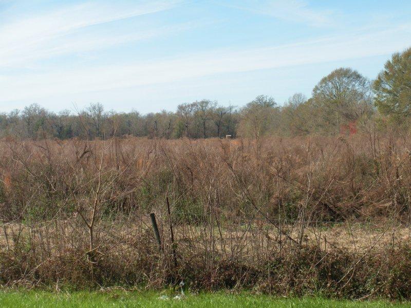 Homesite With Hunting Opportunity : Dupont : Avoyelles Parish : Louisiana