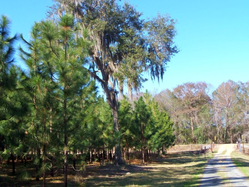 168 Acres With Home, Pines, Bldgs : Jesup : Wayne County : Georgia