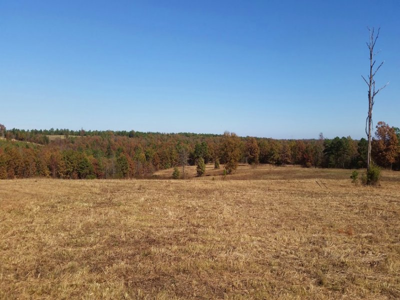Lazy Creek 52 : Bee Branch : Van Buren County : Arkansas