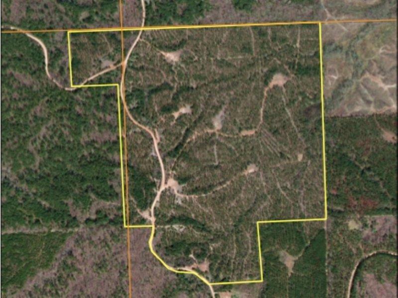 Baumann Road Pine Plantation : Ashland : Benton County : Mississippi
