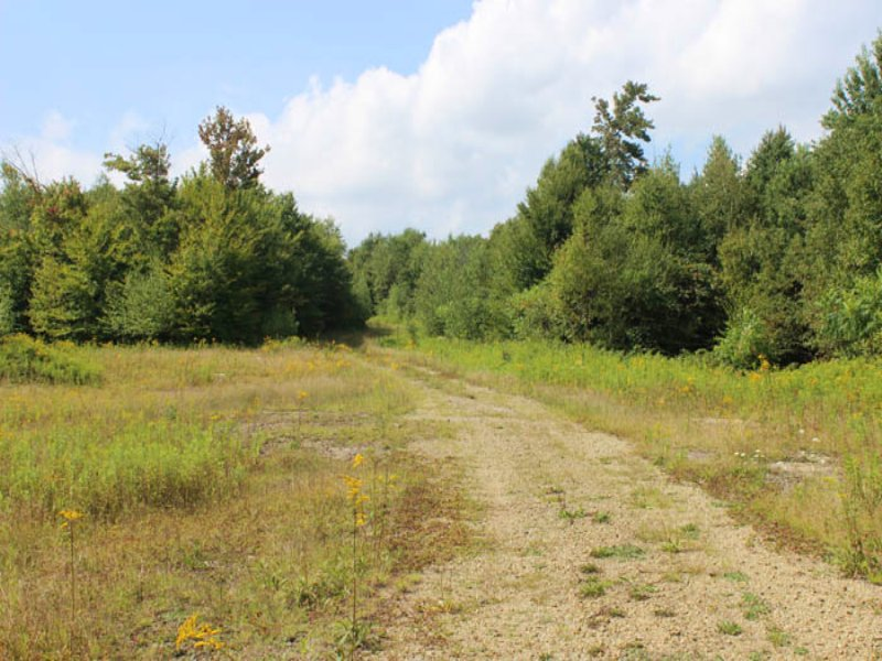 203+ Acres Of Land For Sale : Dushore : Sullivan County : Pennsylvania