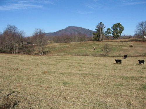 Horse/cattle Farm : Clermont : Hall County : Georgia