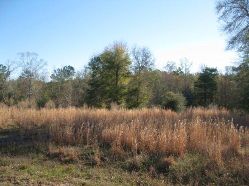 Harmony Hall Tract  B : Cottageville : Colleton County : South Carolina