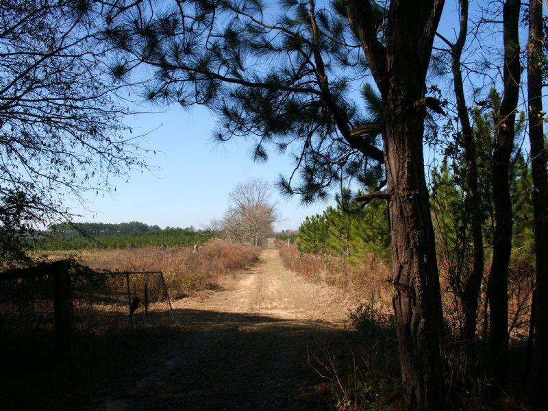 Ditch Rd. Tract : Cordele : Crisp County : Georgia