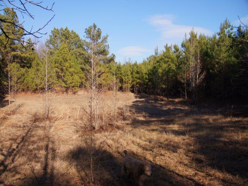 Highway 9 Pasture : Fordyce : Dallas County : Arkansas