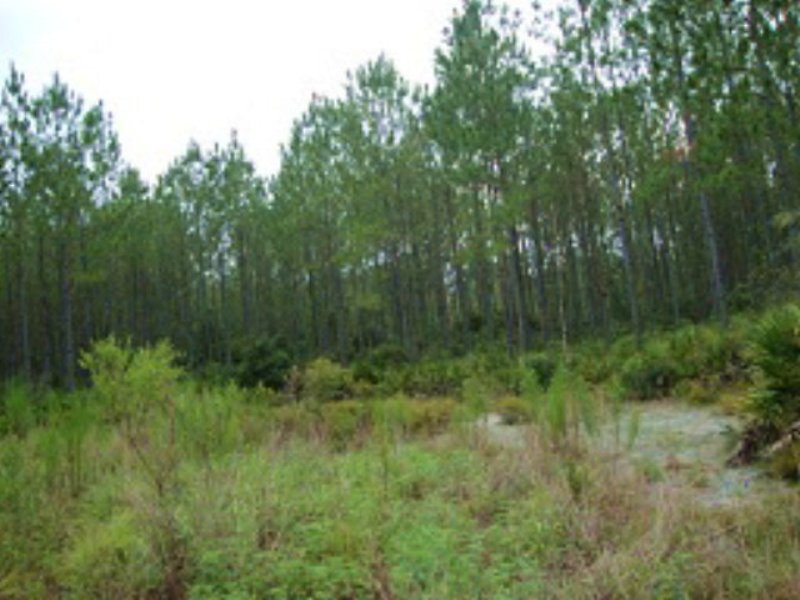 121 Acres And More (769390-d) : Cedar Key : Levy County : Florida