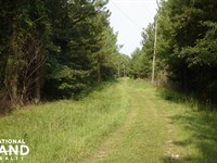 Sipsey Hunting And Timber Tract : Buhl : Tuscaloosa County : Alabama