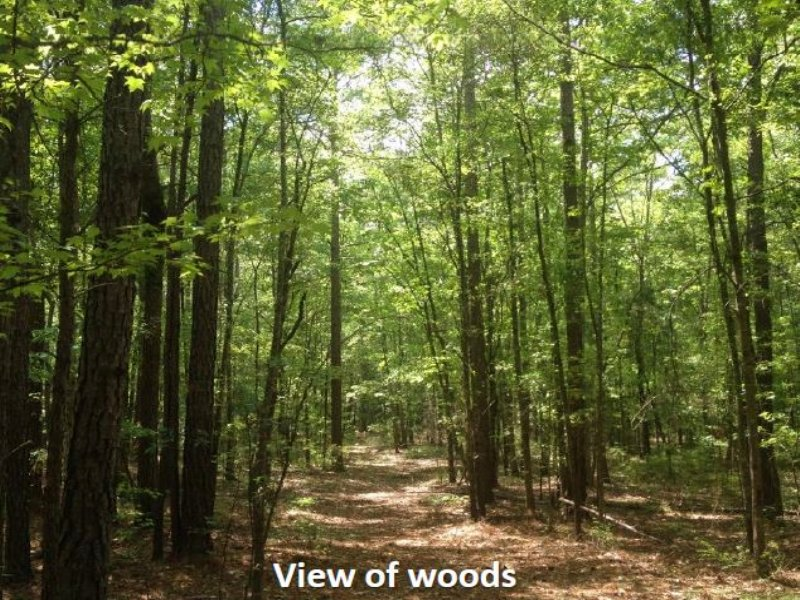 Wooded Tract W/ Creek & Pastureland : Locust Grove : Henry County : Georgia