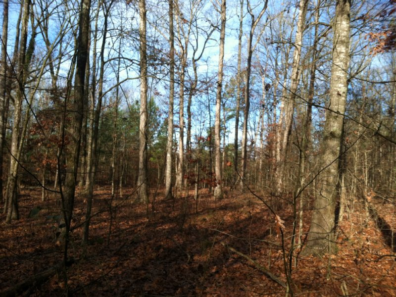 Hunter's Delight : Lexington : Oglethorpe County : Georgia