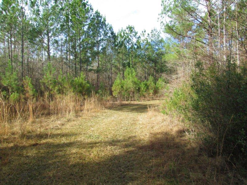 54 Acres Hunting Paradise : Blackshear : Pierce County : Georgia