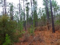 Montford Rd Tract