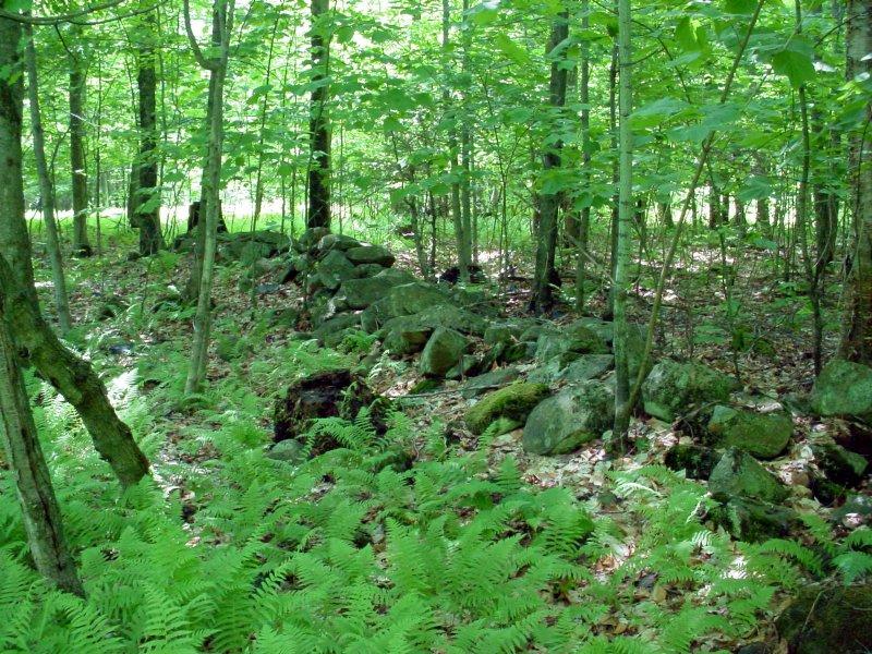 Grafton Forest : Grafton : Rensselaer County : New York