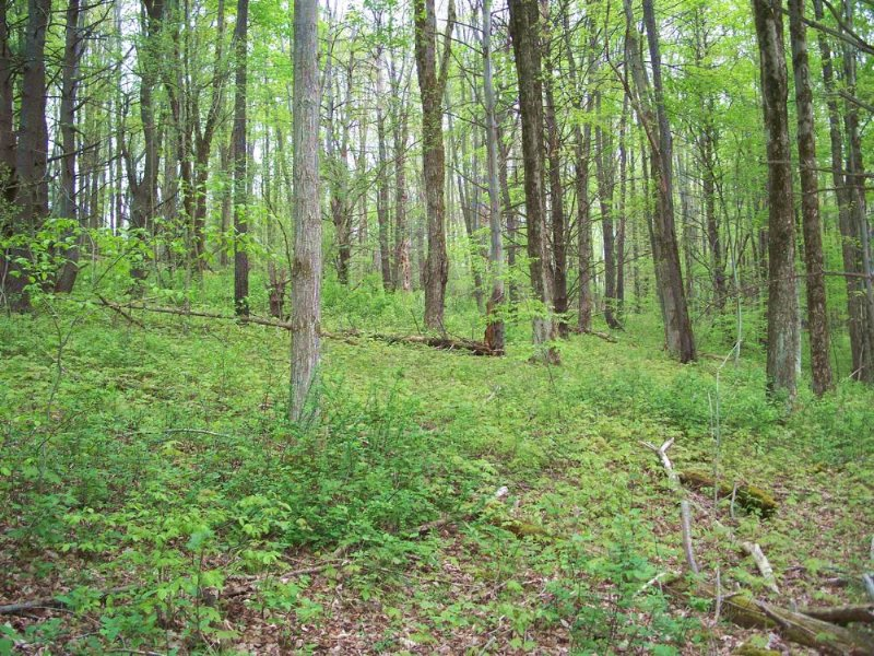 Land Near Danby State Forest : Danby : Tompkins County : New York