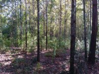 45 Acres In West Lincoln School : Brookhaven : Lincoln County : Mississippi