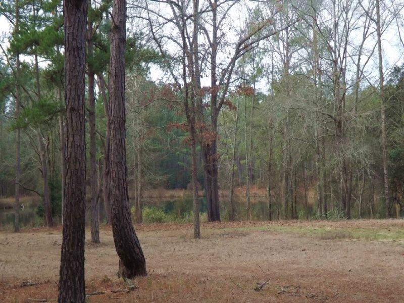 Timberland With Spring Fed Pond : Cusseta : Chattahoochee County : Georgia