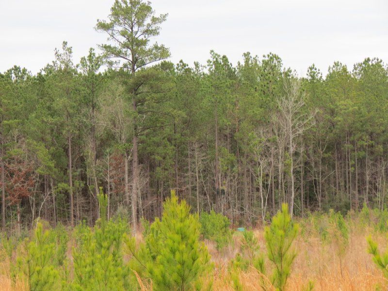 40 Acres In Wesson : Wesson : Copiah County : Mississippi