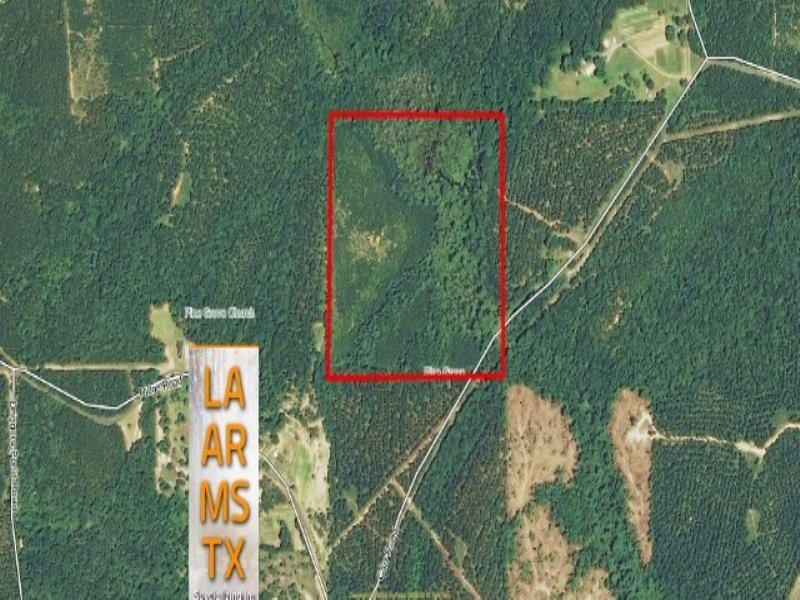 40 Acres Hunting Land, Recreation : Saline : Bienville Parish : Louisiana