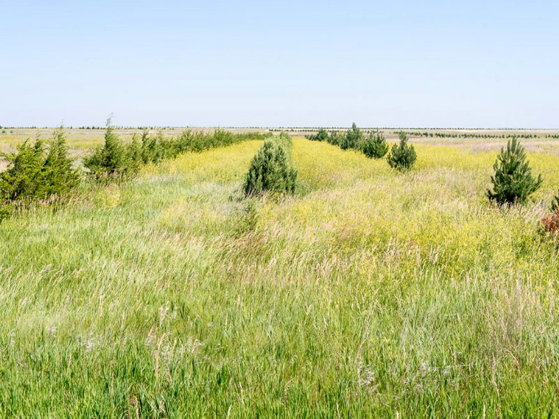 Eitel Section : Bushnell : Kimball County : Nebraska
