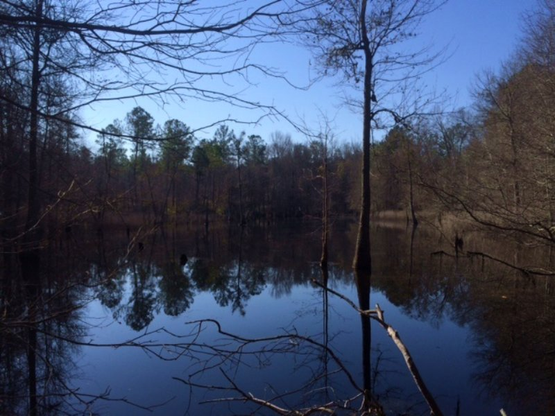 Hunting Tract With Big Beaver Pond : Butler : Taylor County : Georgia