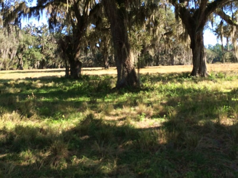 Absolutely Gorgeous 89 Acres : Brooksville : Hernando County : Florida