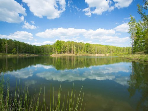 444 Acres With 12 Acre Bass Lake : McEwen : Humphreys County : Tennessee