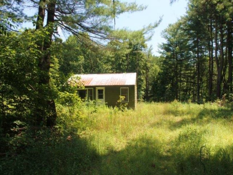 Cabin Borders State Forest & Trails : Williamstown : Oswego County : New York