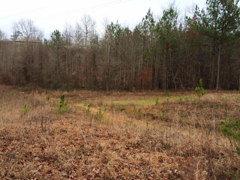Near Bass Pro - 40 To 162 Acres : Pell City : Saint Clair County : Alabama