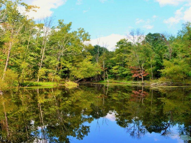 Sr 140  - 492 Acres : Oak Hill : Scioto County : Ohio