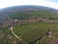 1,538 Acres Camden Forest : Camden : Polk County : Texas