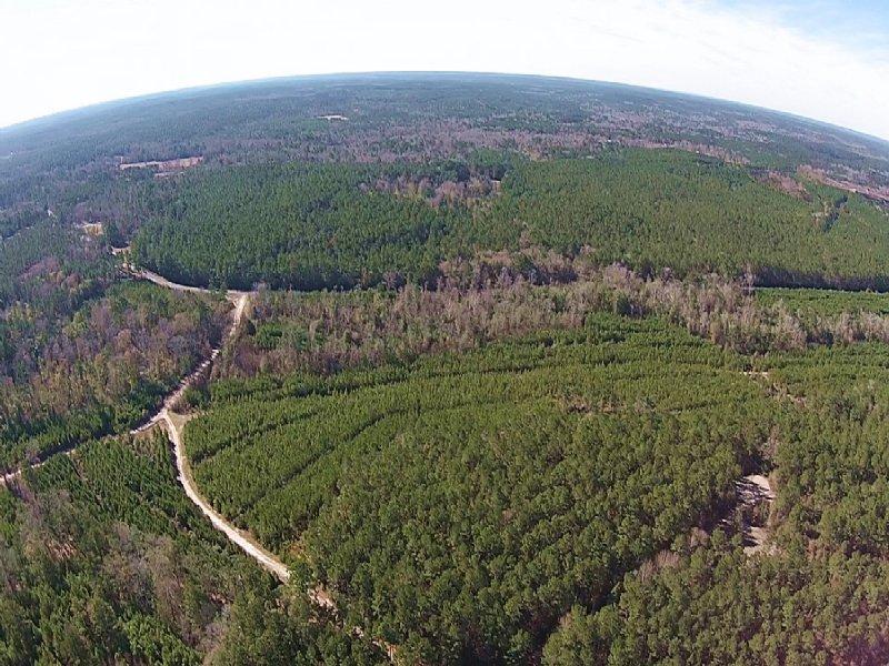 1,538 Acres Camden Forest : Camden : Polk County : Texas