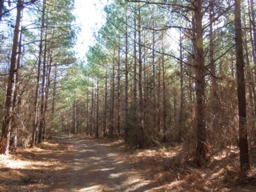 Firmly Rooted, Llc Tracts : Goldston : Chatham County : North Carolina