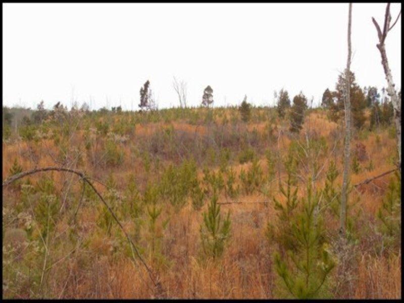 39.5 Acres In Montgomery County, Se : Winona : Montgomery County : Mississippi