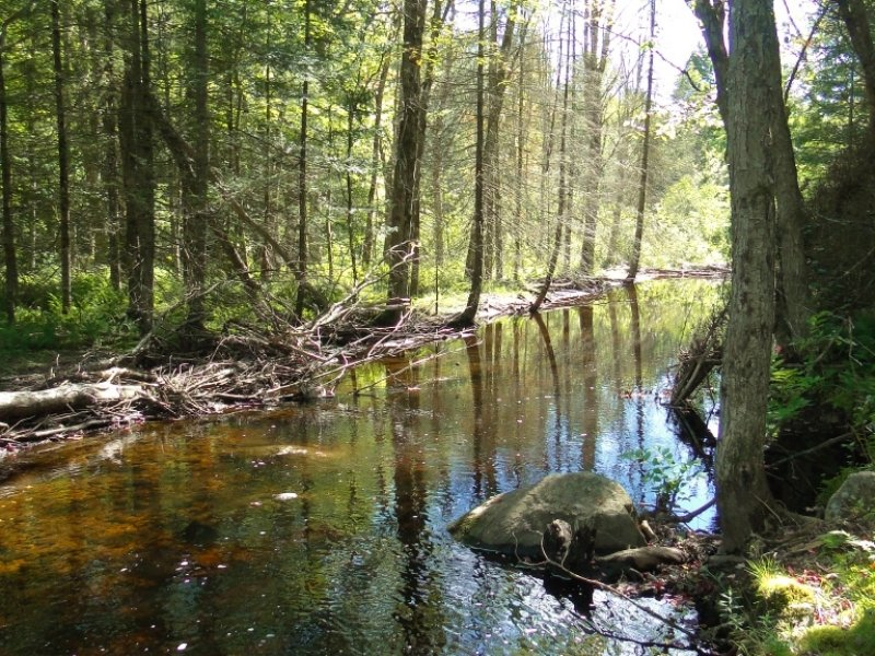 75 Acres Oppenheim Ny Trout Stream : Oppenheim : Fulton County : New York