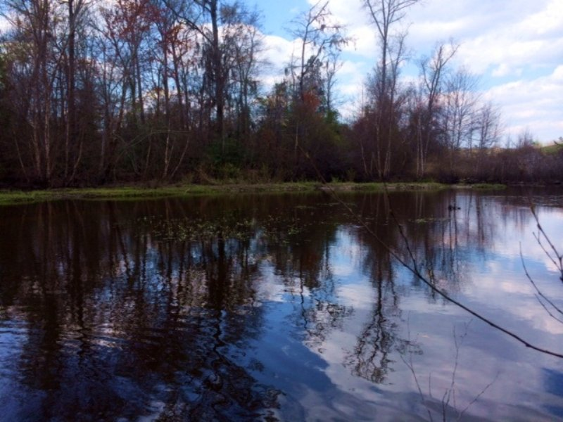 Riverfront Hunting And Timber : Wrightsville : Johnson County : Georgia