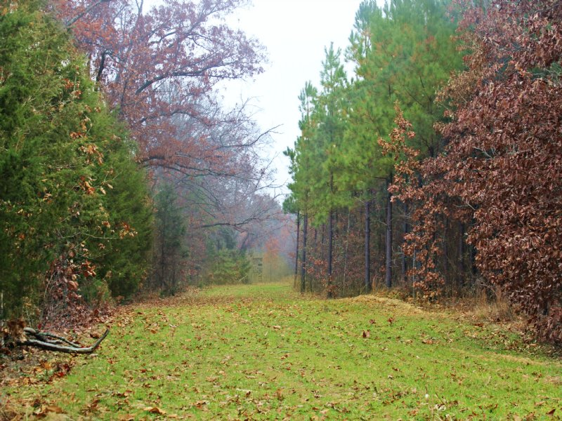 Large Hunting Retreat/timberland : Mount Pleasent : Bowie County : Texas