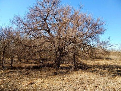 Bonebrake 80 : Windom : McPherson County : Kansas