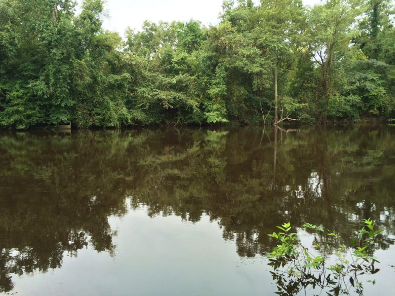 Clark Tract Cape Fear River : Wilmington : Pender County : North Carolina