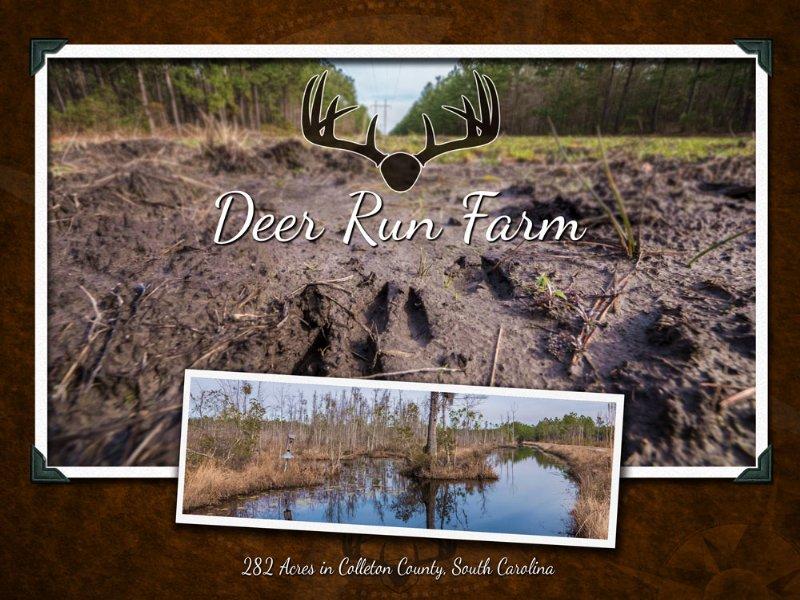 Deer Run Farm : Ruffin : Colleton County : South Carolina