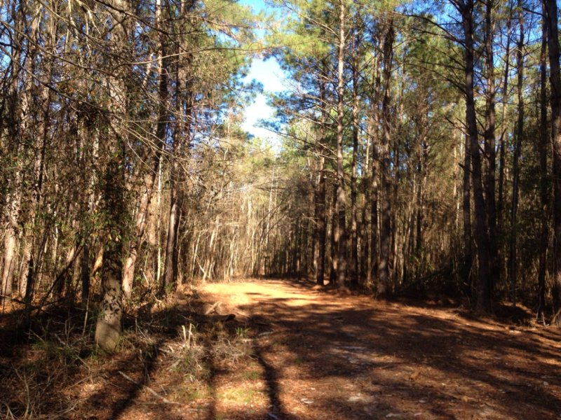 125 Acres With House : Mullins : Marion County : South Carolina