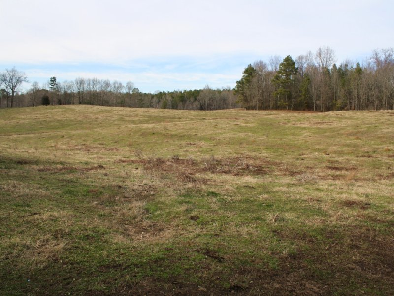 Online Only Auction 21+/- Acres : Muscadine : Cleburne County : Alabama