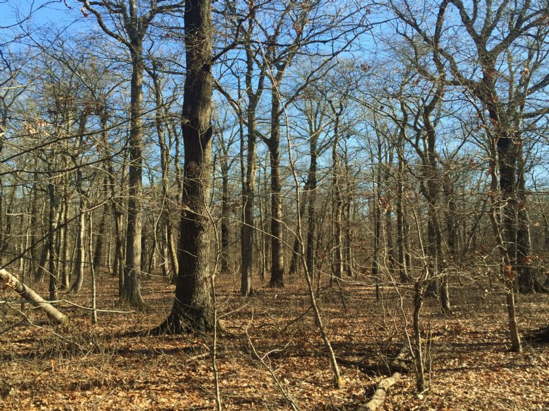 40+/- Acres Of Timber For Sale : Humphrey : Jefferson County : Arkansas