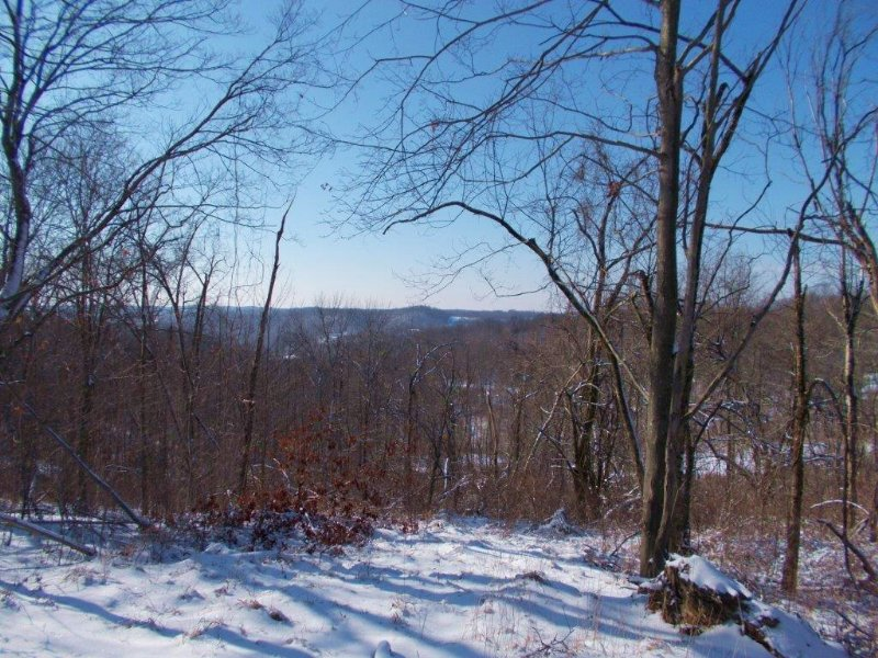 Cowgill Rd - 52 Acres : Sarahsville : Noble County : Ohio