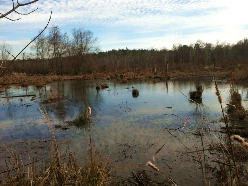 Duck Hunting At Newford Creek : Washington : Wilkes County : Georgia