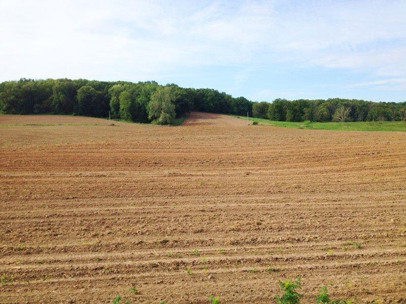 40 Acres, Nice Tillable Farm : Nebo : Pike County : Illinois