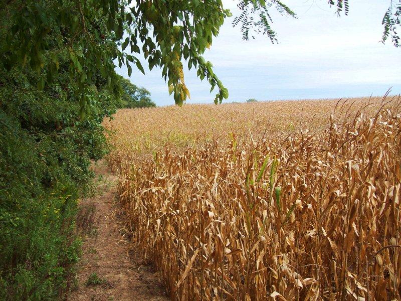 91.78 Acres Big Timber Hunting Farm : Baylis : Pike County : Illinois