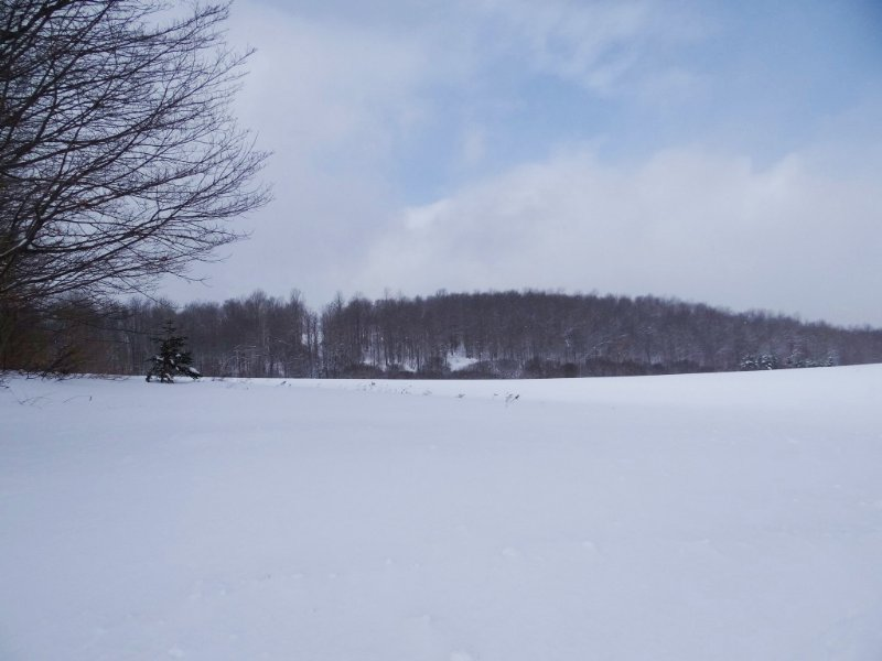 Hunting Land Borders State Forest : Smyrna : Chenango County : New York