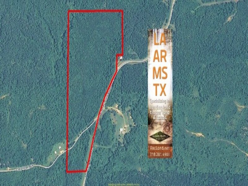 55 Ac - Pine Timberland For Hunting : Coffeeville : Yalobusha County : Mississippi