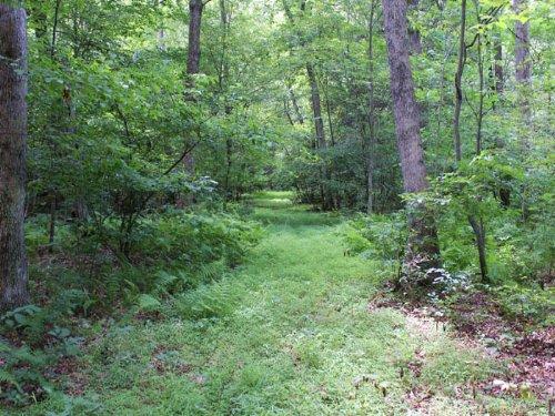 16+/- Acres Land For Sale : Danville : Montour County : Pennsylvania