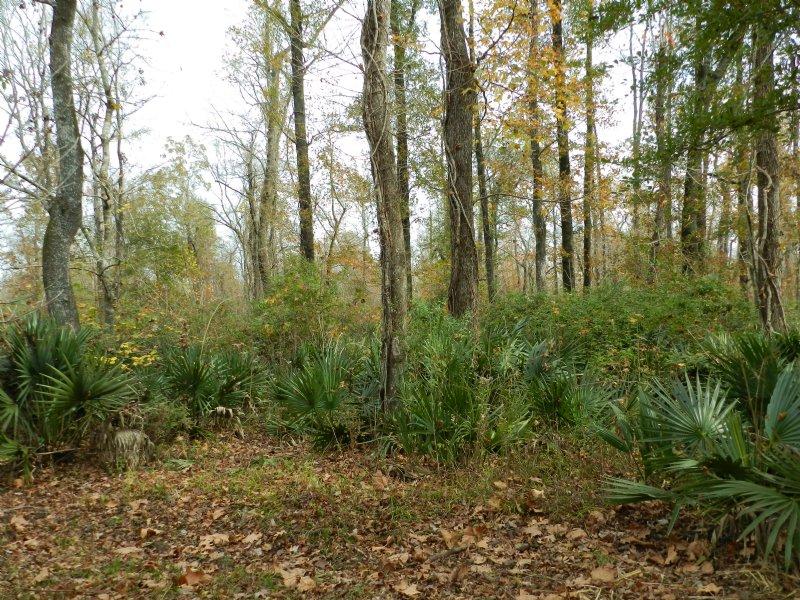 80 Acres Near Goudeau : Evergreen : Avoyelles Parish : Louisiana